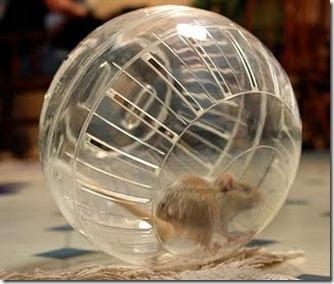 Gerbil in Ball[1]